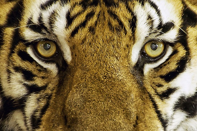 Learn about The Tyger Analysis