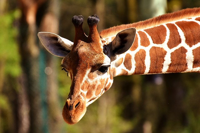 Create exciting zoo lesson plans for preschool