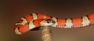 Are Snakes Shifty or Maligned?